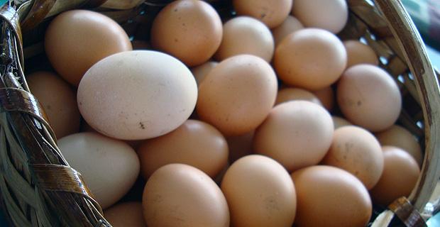 huevos-ecologicos1
